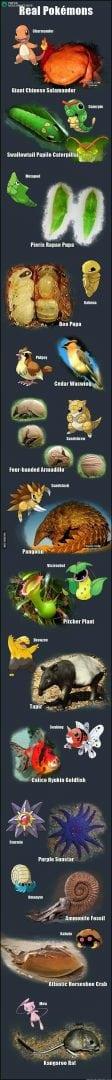 Pokémons na vida real