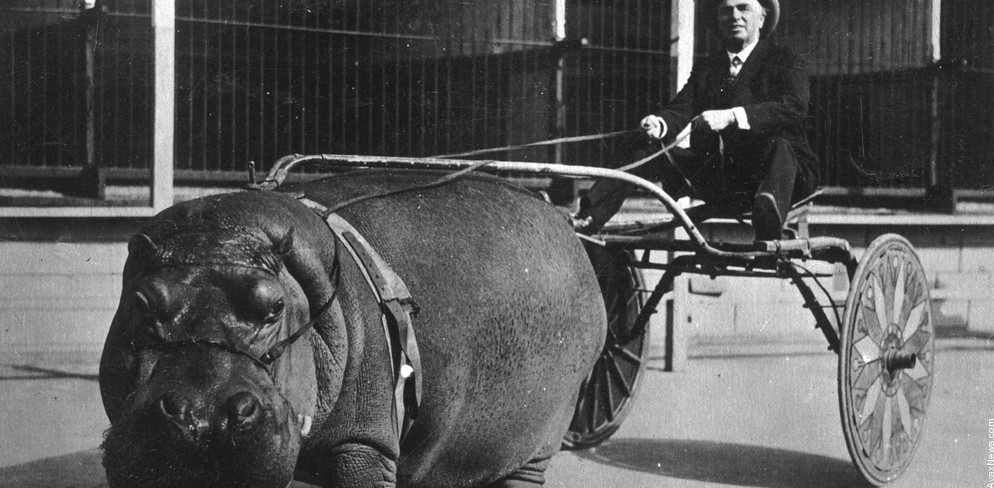 15 fotos raras que revelam momentos históricos impressionantes