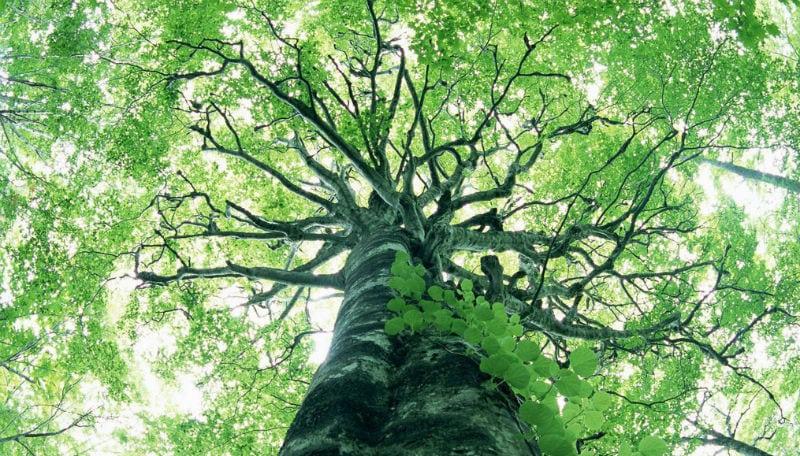 Que tal se tornar uma árvores depois de morrer?
