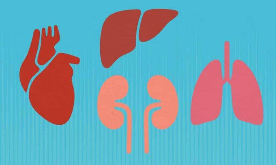 Órgãos humanos: quanto custa um rim e outros órgãos no mercado negro?