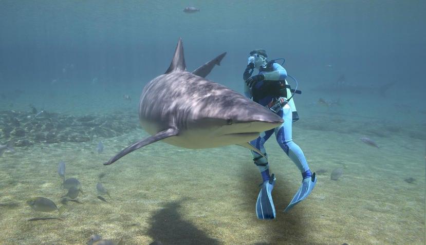 Filme Mit Haien