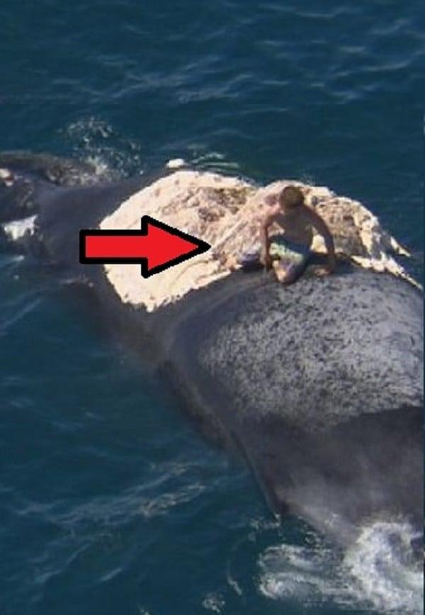 Surfista sobe em baleia e quase vira comida de tubarão