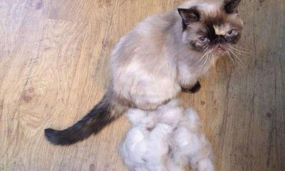 20 fatos que os donos de gato precisam saber agora mesmo