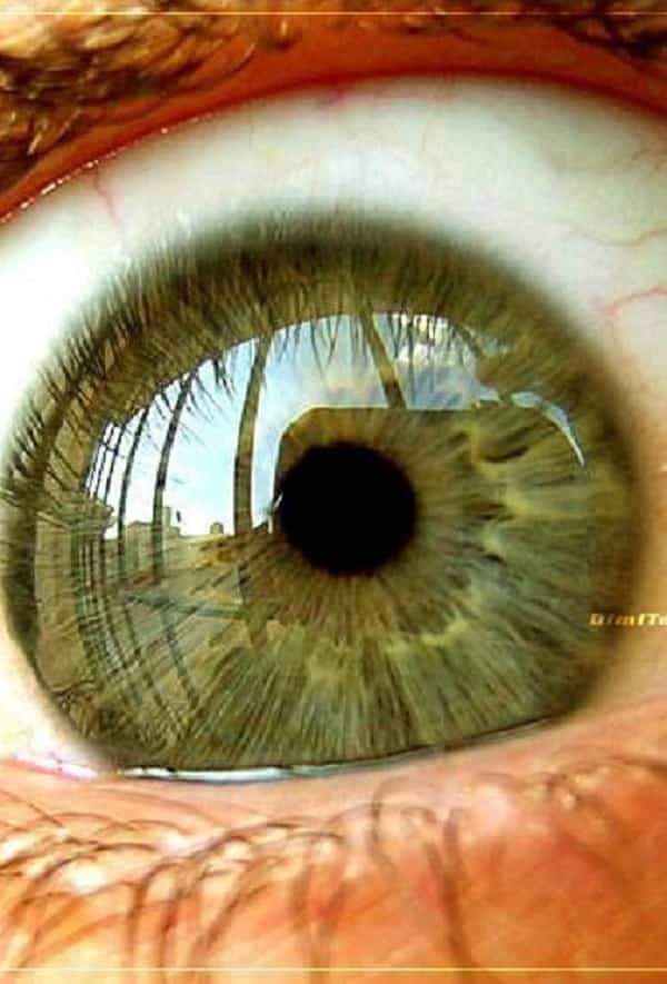 Posição dos olhos pode prever sua morte, segundo japoneses