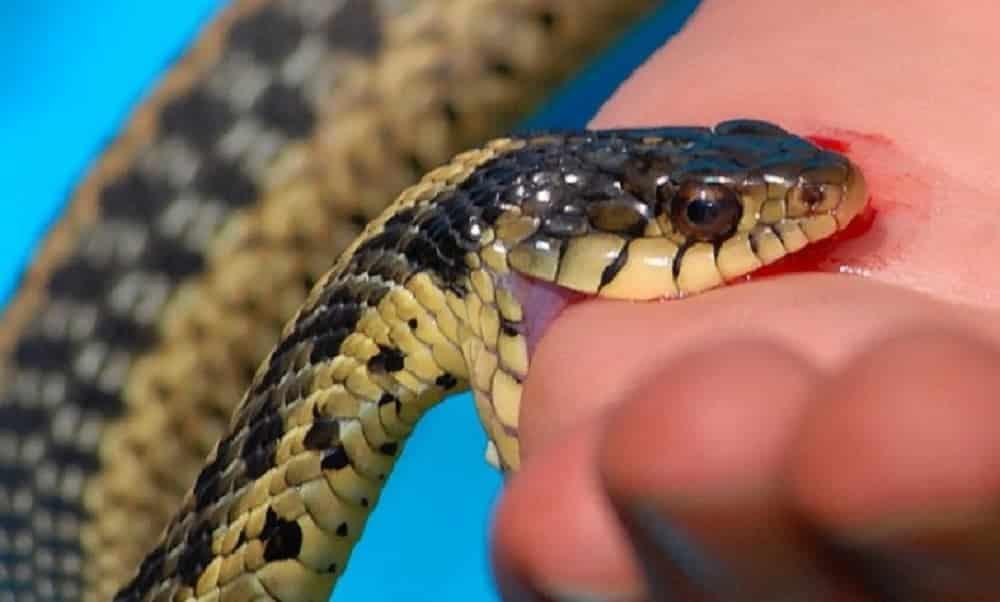 5 animais venenosos que podem salvar sua vida