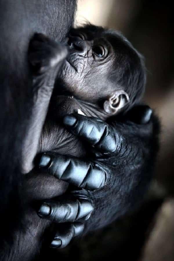 12 flagrantes adoráveis de animais com seus filhotes