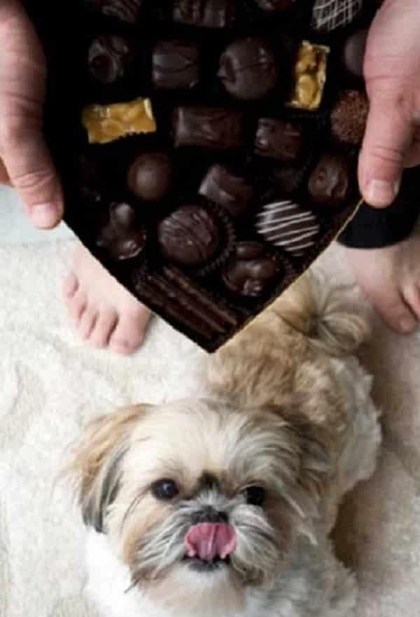 15 alimentos proibidos para cachorros e que as pessoas não sabem