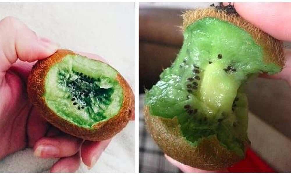 Você comeu kiwi do jeito errado a vida toda, segundo a Ciência