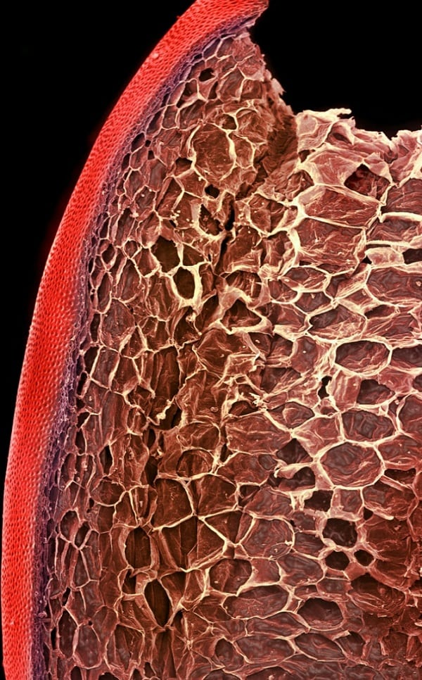 Veja como são as comidas vistas pelo microscópio