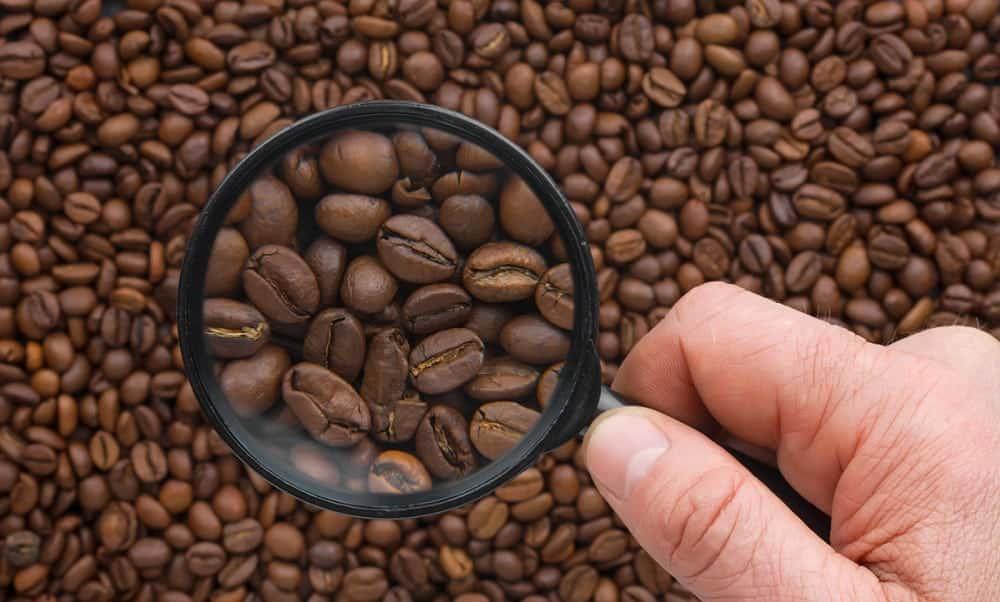 Conheça os alimentos que mais contém cafeína no mundo