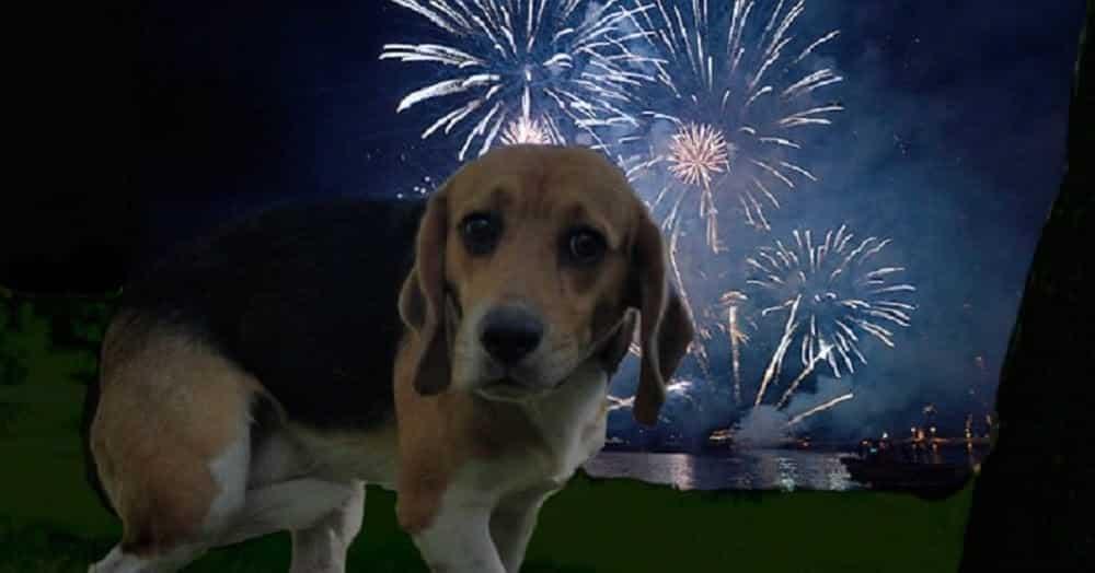 Como proteger seu cão de fogos de artifício com o truque do pano