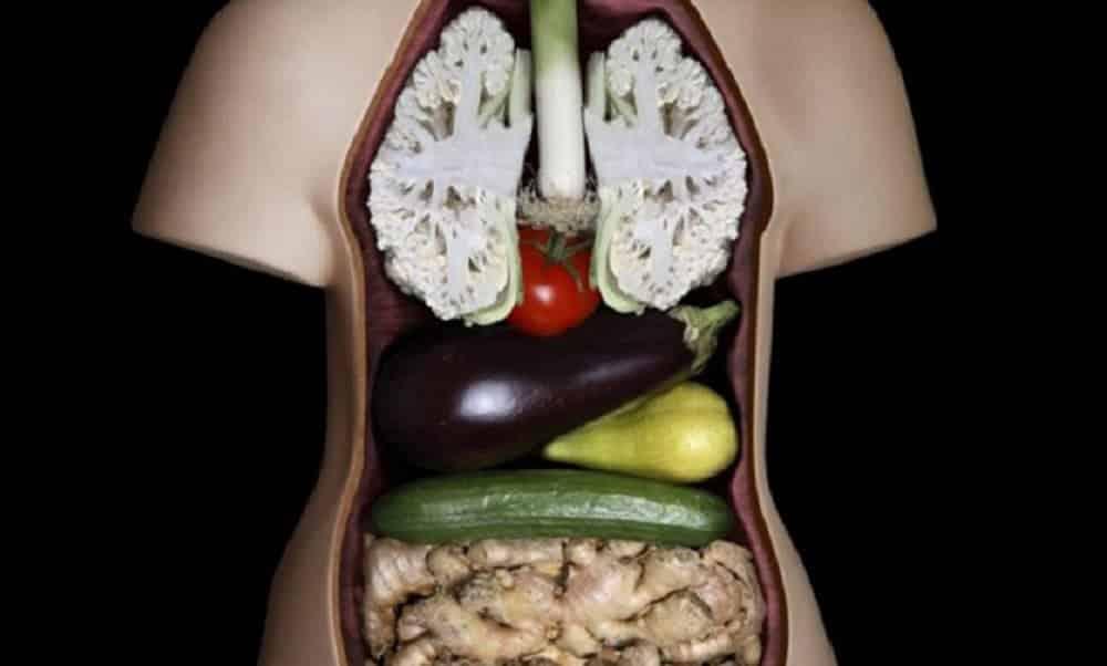 Aparência dos alimentos é igual aos órgãos que eles curam