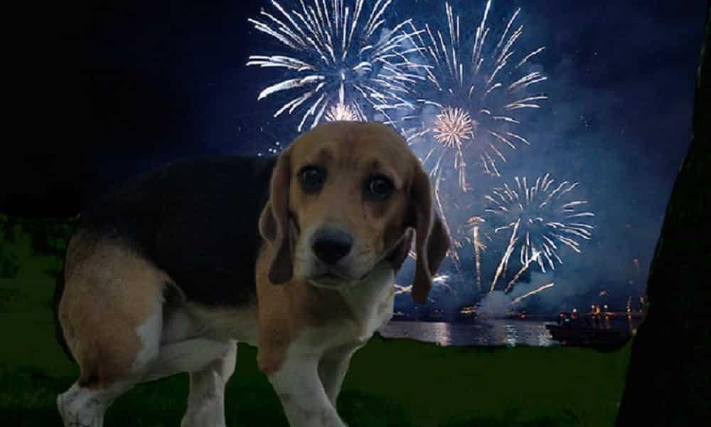 Como proteger seu cão do medo de fogos de artifício