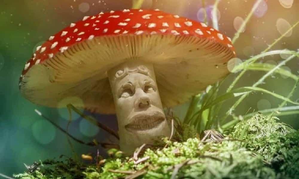O que acontece com o cérebro de quem usa cogumelos alucinógenos?