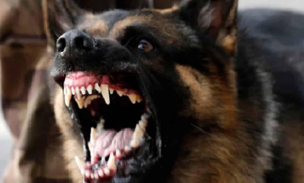 O que fazer se você for atacado por cachorro