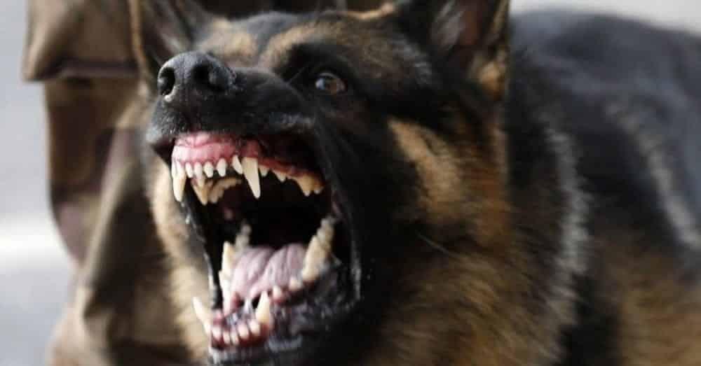 Ataque de cachorro bravo - O que fazer se isso acontecer?