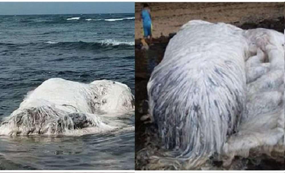 Criatura gigante e peluda aparece em praia nas Filipinas e intriga moradores
