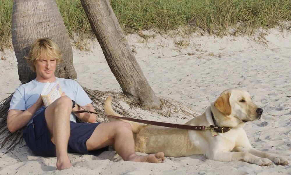 Cães imitam a personalidade dos donos, afirma a Ciência