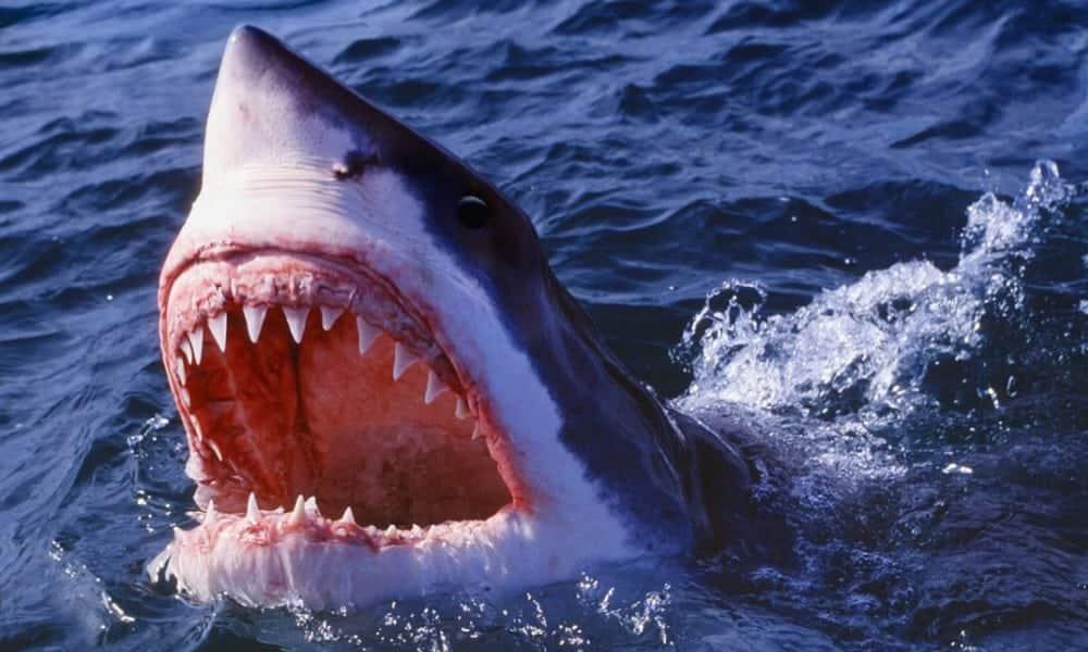 Descubra como sobreviver a um ataque de tubarão