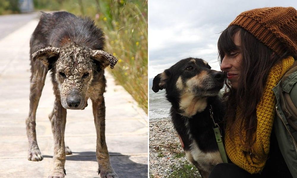 A maravilhosa transformação dessa cadela de rua emocionou a internet