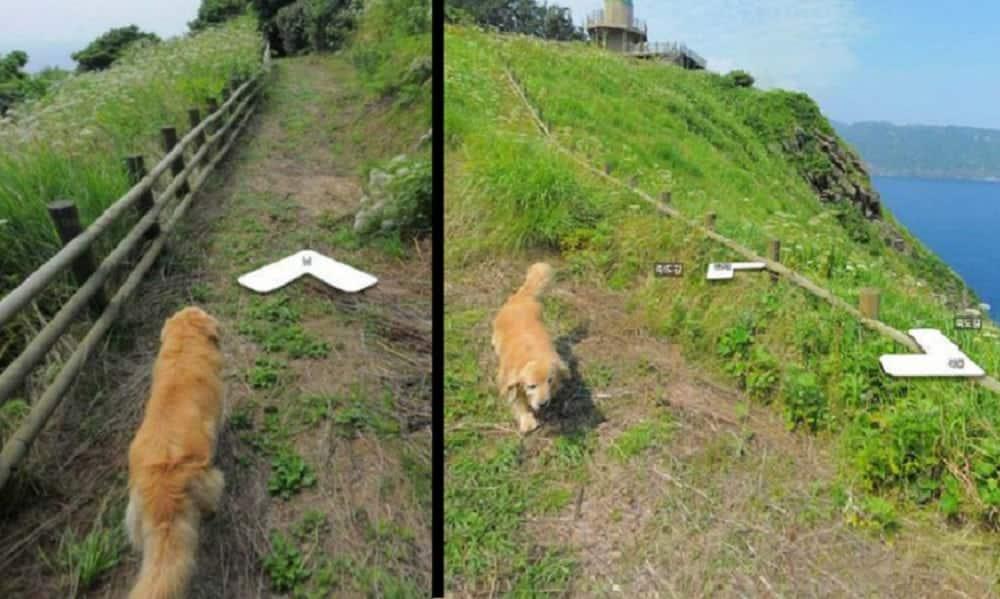 Cachorro segue carro do Google e sai em todas as fotos do bairro no Street View