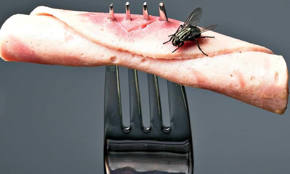 Maneiras naturais de acabar com as moscas em casa sem usar veneno