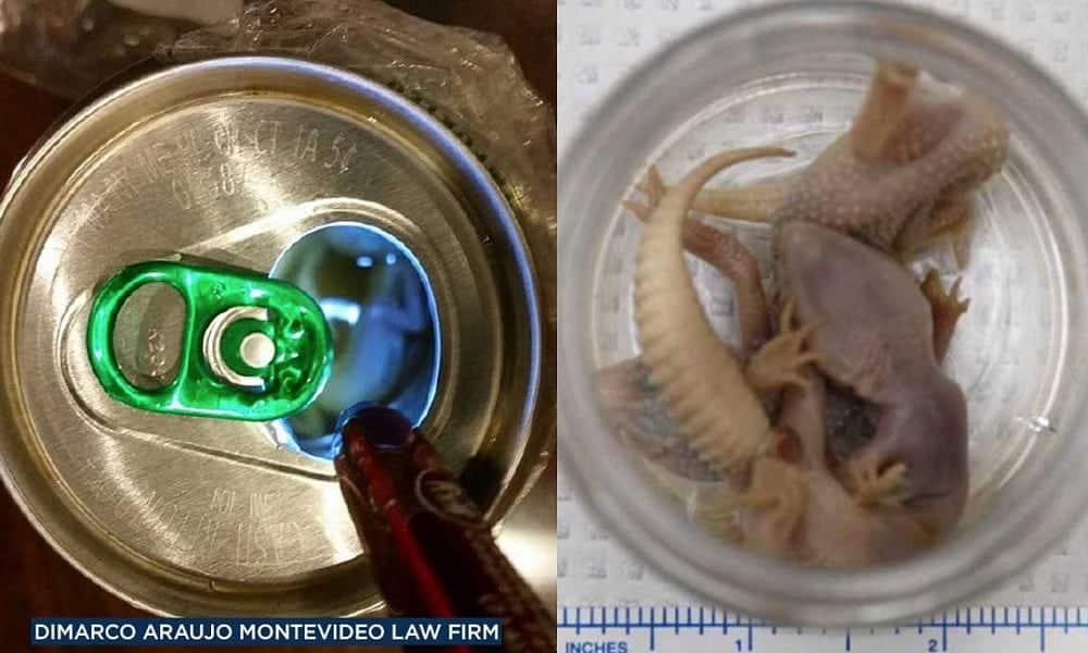 Homem sente gosto estranho em cerveja e encontra lagartixas mortas na lata