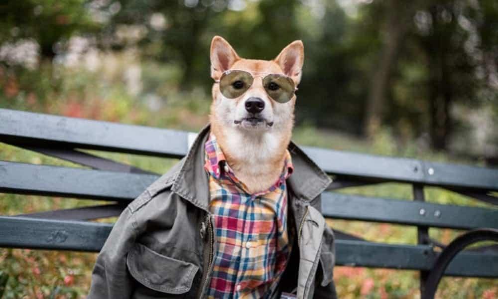 Cão modelo ganha equivalente a R$ 48 mil por mês fotografando looks