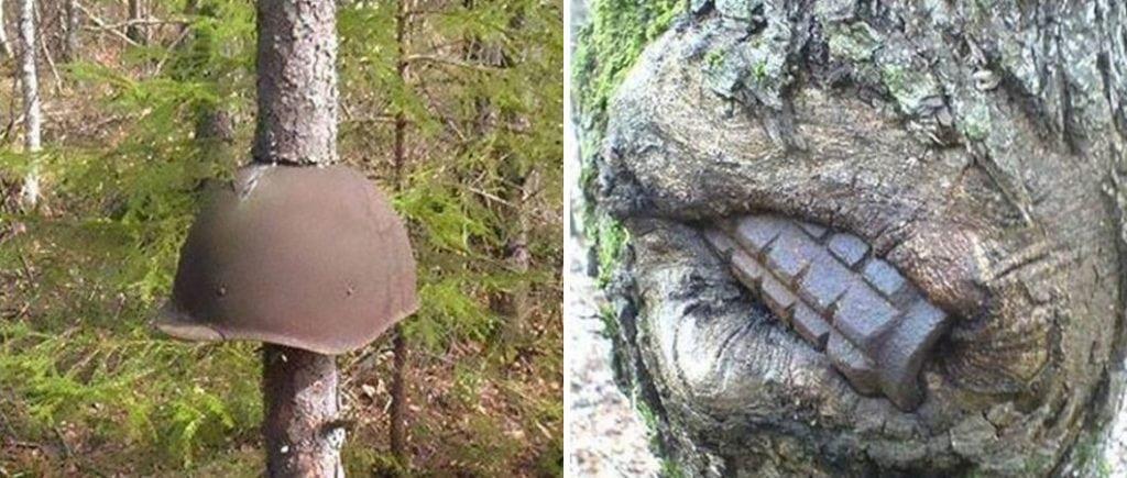 Fotos surreais mostram armas da 2º Guerra Mundial brotando em árvores na Rússia