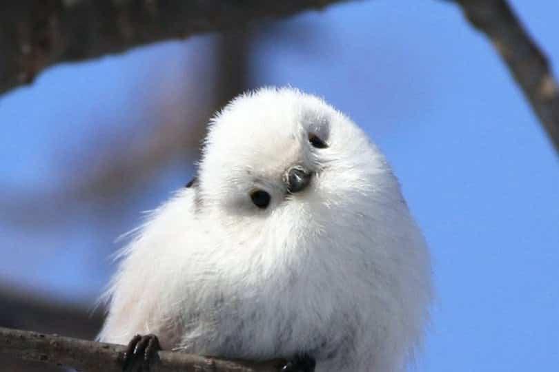 Suficiente 56 fotos de animais fofos que vão fazer você sorrir YA97