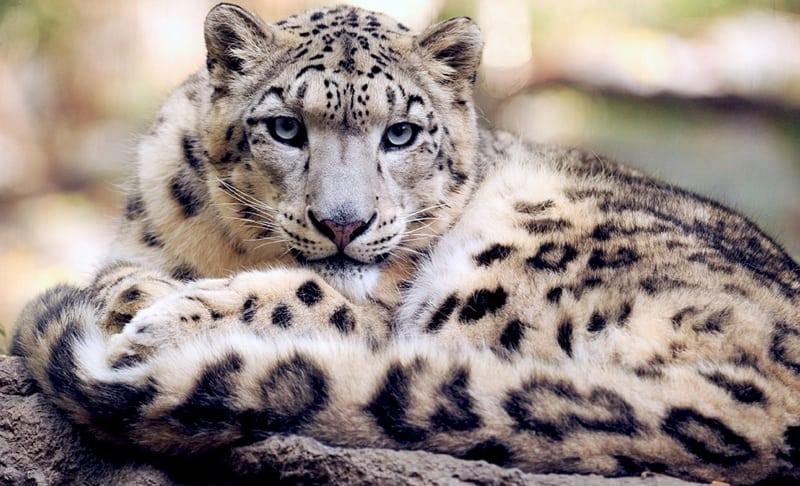 Felinos 23 Mais Extraordinários E Curiosos Do Mundo