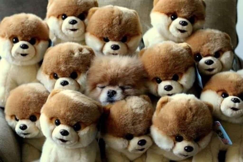 Fotos de cachorros – As 100 mais adoráveis da internet