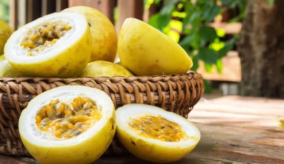 Como plantar maracujá e cuidados que você deve ter no cultivo da fruta