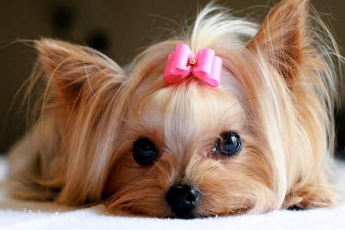 Nome de cachorro: mais de 1000 opções para nomear o seu animal