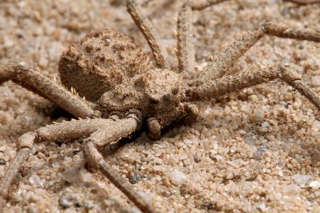 15 aranhas mais venenosas e perigosas do mundo