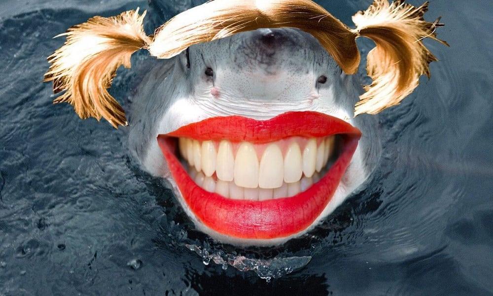 Como se chama o tubarão fêmea? Descubra o diz Língua Portuguesa