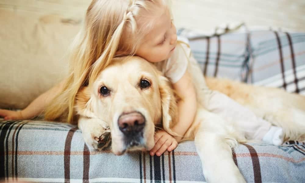 12 raças de cachorro dóceis que você pode adotar sem medo