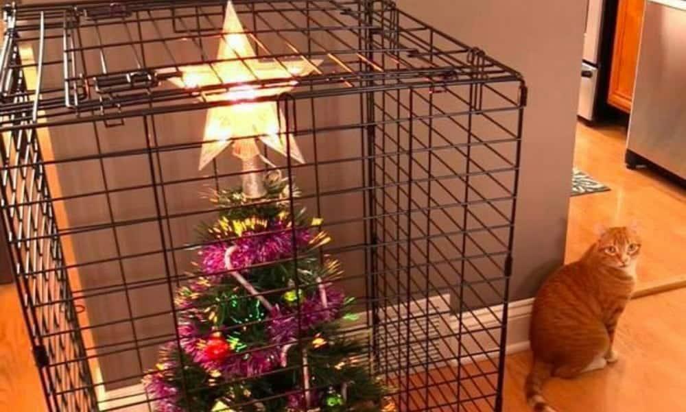 Como manter uma árvore de Natal em casa com animais de estimação