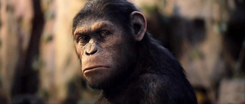 Teoria da Evolução, o que é? Ela realmente diz que viemos dos macacos?