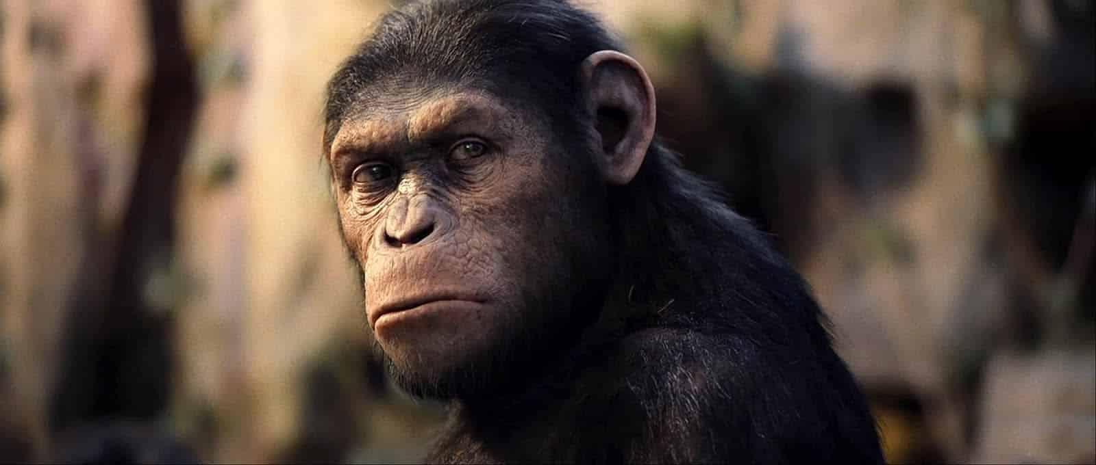 O que é a Teoria da Evolução? Ela realmente diz que nós viemos dos macacos?