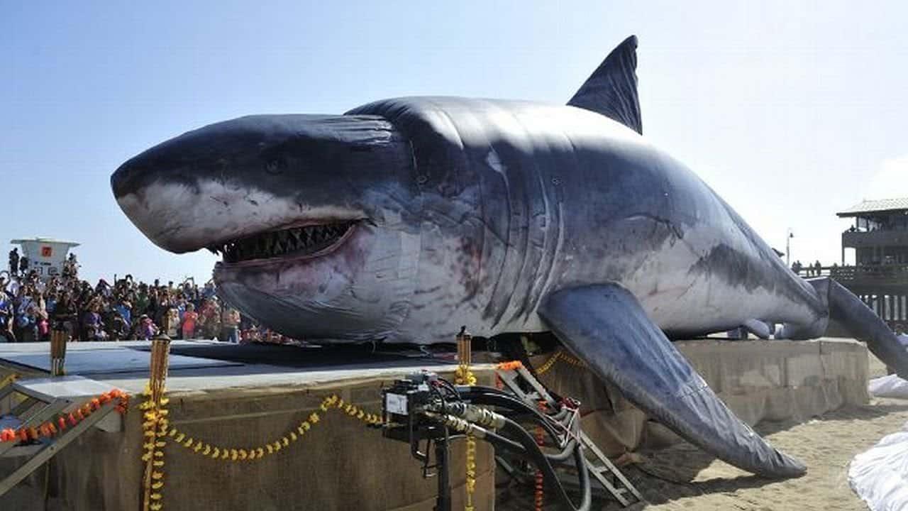 Megalodon: Maior tubarão pré-historico ainda existe?