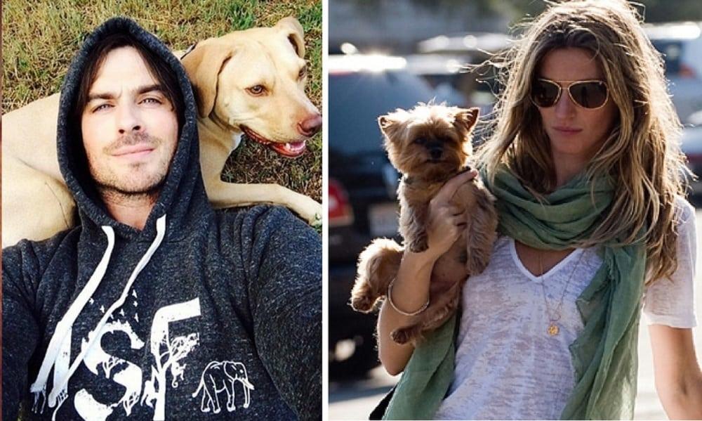 Saiba quais são os nomes dos cachorros dos famosos