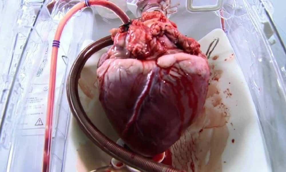 Qual o limite máximo e o mínimo para os batimentos cardíacos?