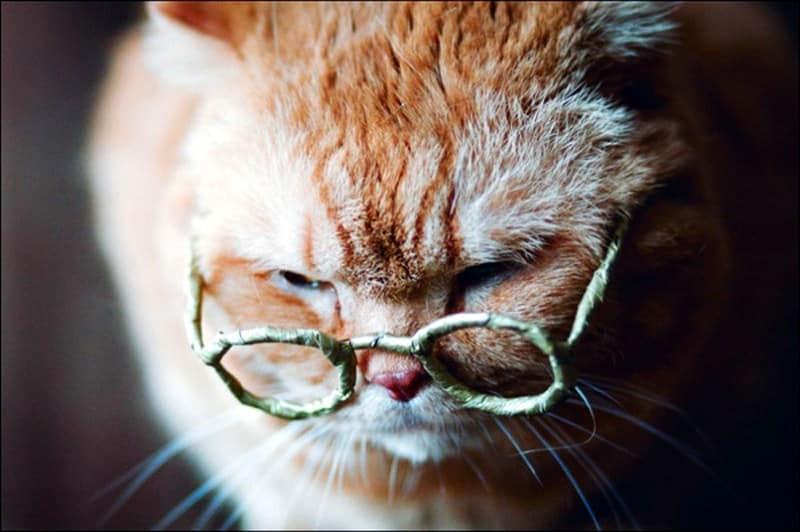 Como calcular a idade do seu gato (e saber a idade humana que ele tem)