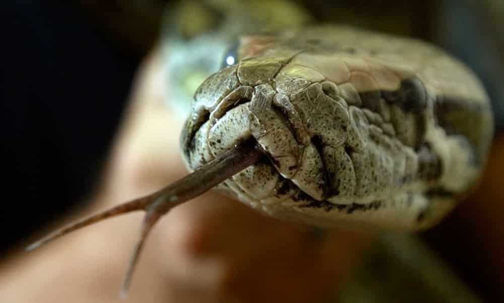 Você já viu como as cobras bebem água? Descubra no vídeo