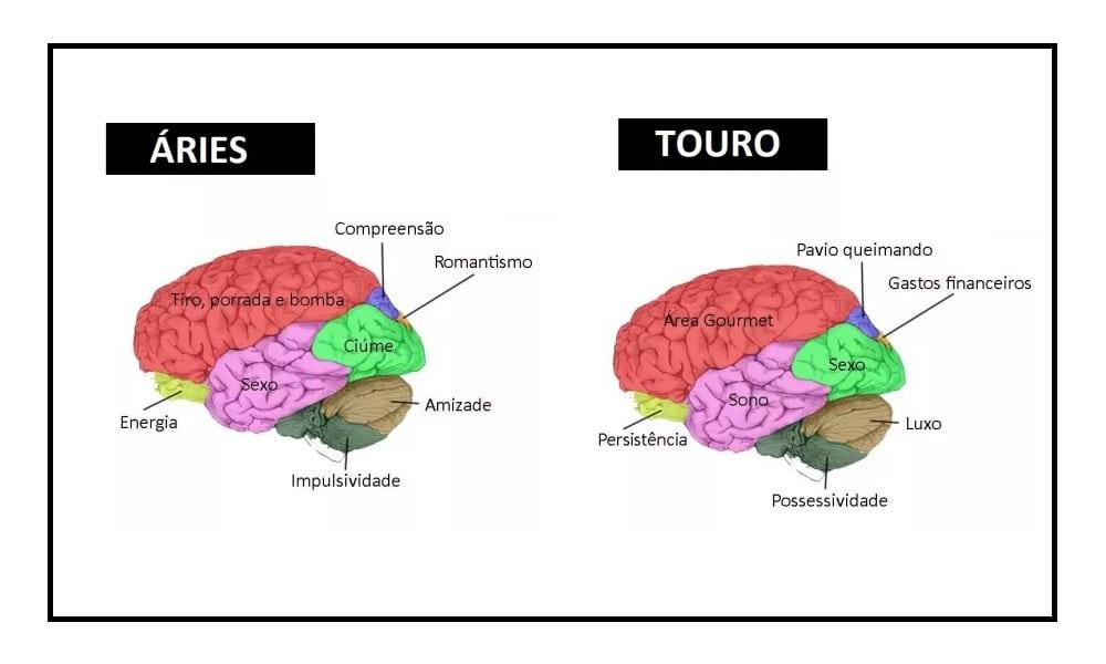 Como é o cérebro de cada um dos signos do zodíaco