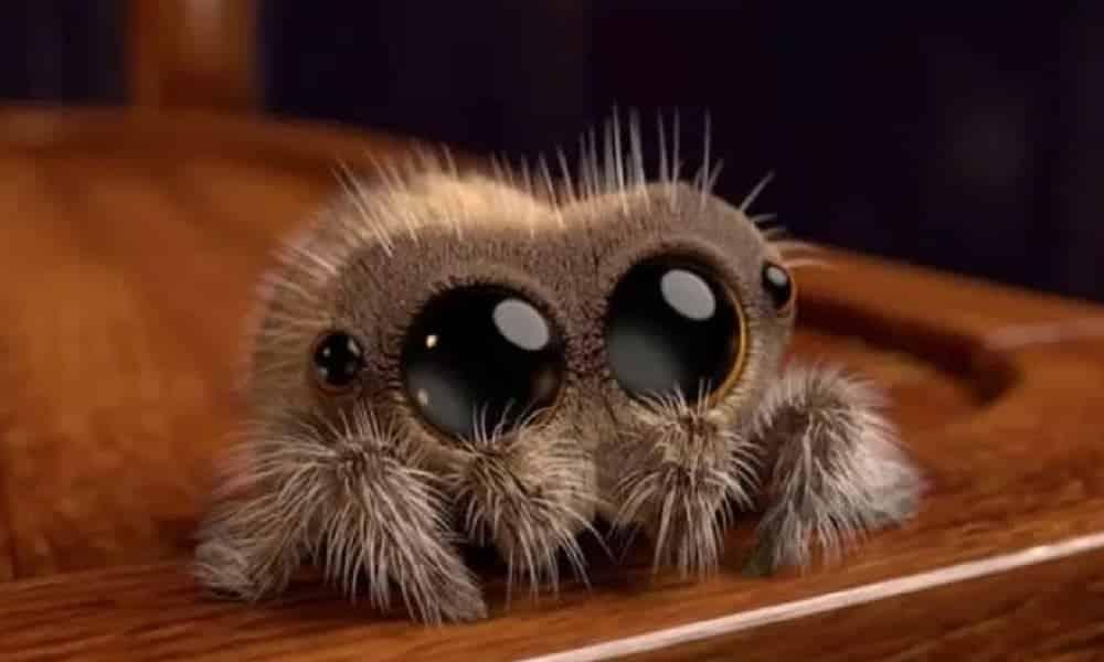 Você nunca mais vai matar aranhas dentro de casa depois de ler isso