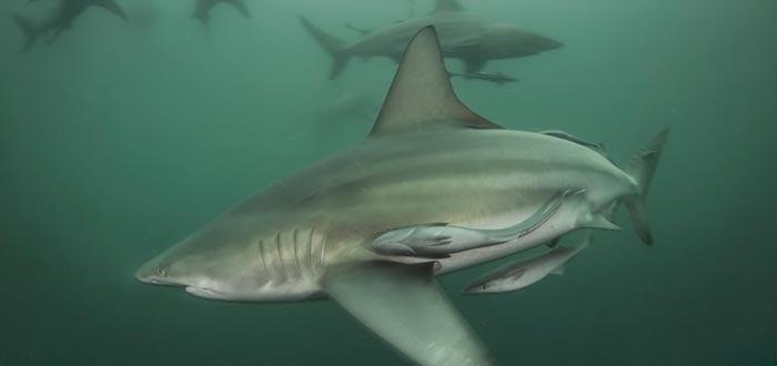curiosidades-del-mundo-vida-atacado-por-un-tiburon