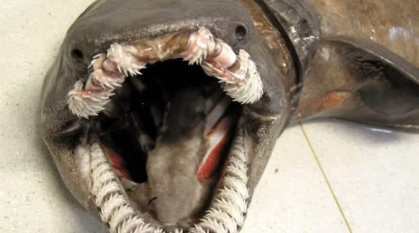 10 bizarras espécies de tubarão documentadas pela ciência