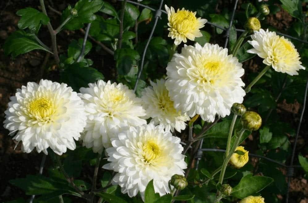 10 plantas que vão te ajudar a repelir os insetos da sua casa
